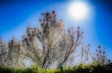 sole primavera