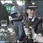 carabinieri uccellaggione